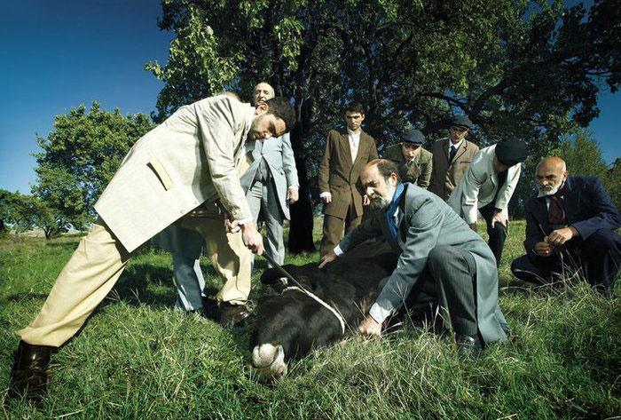 Свадебный бык заколот
