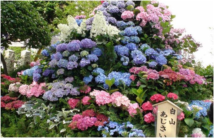 Японские цветы во время ежегодного фестиваля