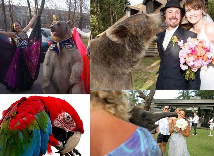 Четвероногие друзья – участники свадебного шоу